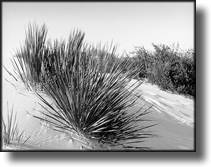 Black and White Picture of White Sands, New Mexico