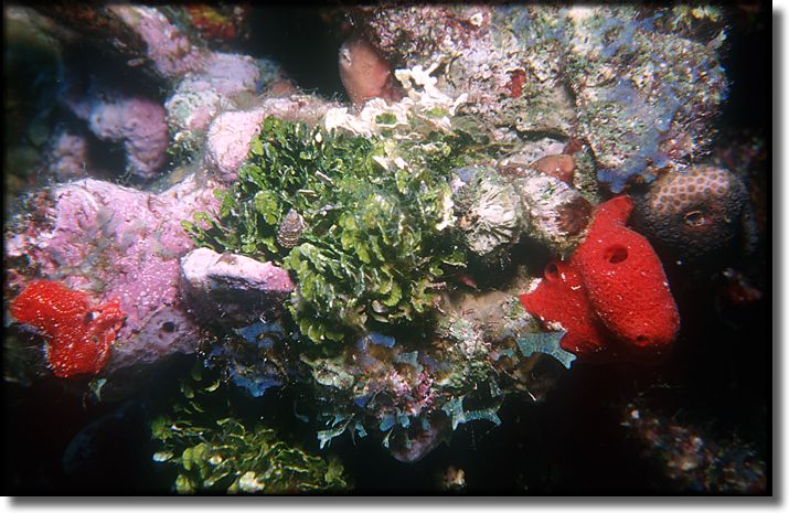 Picture of Sponge and Coral, Grand Cayman Island